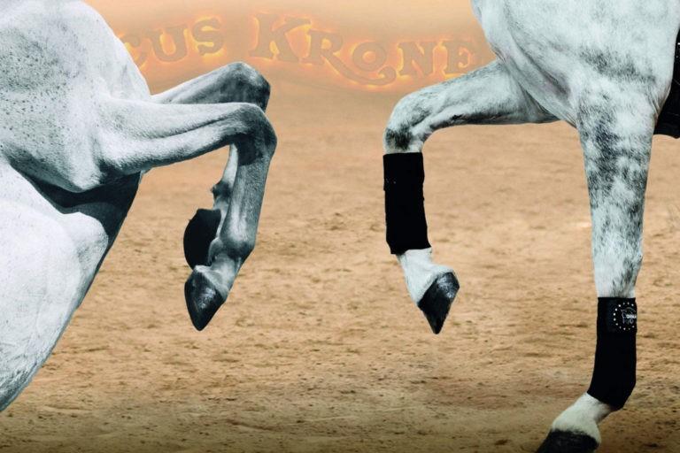 Pferde Tagung Anja Beran Stiftung